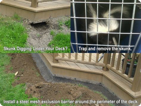 my dog keeps marking in the house skunks digging under a deck or porch how to trap remove