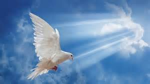 welt frieden world peace la paz universal youtube