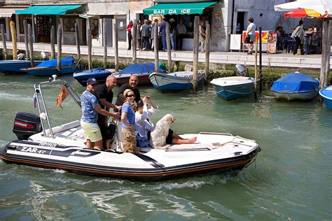 dog on boat to europe high quality stock photos of quot venezia quot