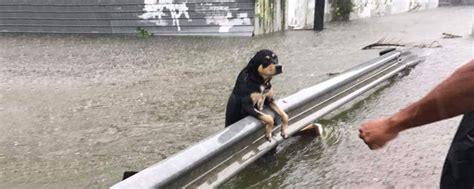 hurricane harvey dogs embark donates 100 profits to help hurricane harvey dogs
