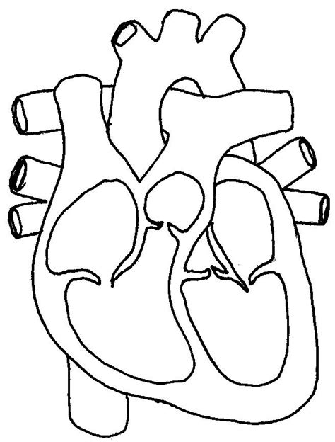 heart diagram coloring page circulatory system coloring pages az coloring pages