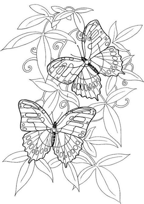 coloring pages for adults butterflies butterflies coloring pages for adults to print