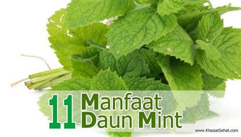 manfaat daun mint bagi kesehatan efek sampingnya