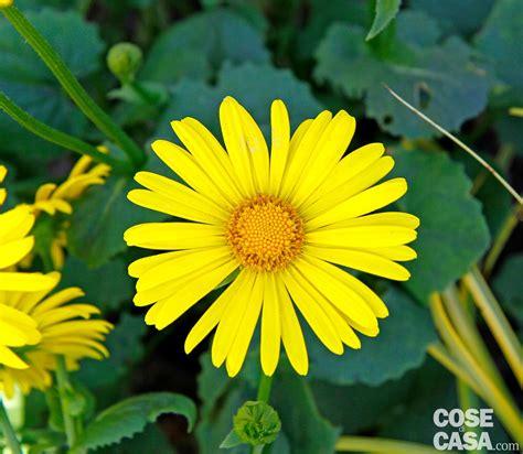 piante fiori gialli fiori gialli da giardino perenni mekan info