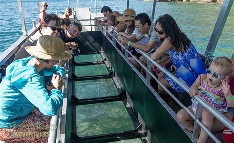cairns glass bottom boat reef tours cairns great barrier reef islands holiday package