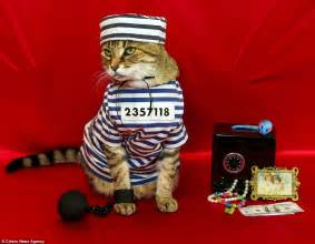 carla hervert s cat tabby has 75 costumes including chef painter and prisoner daily mail online