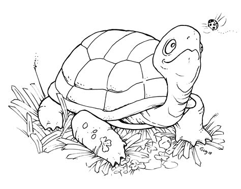turtle digital st freebie happy saturday the