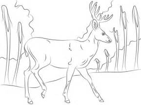 coloring pages of mule deer pin mule deer colouring pages on pinterest