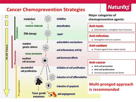 Modern Approaches To Detoxing by Modern Cancer Prevention Approach