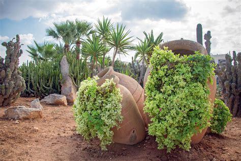 desert backyard landscaping ideas desert landscaping landscape channel