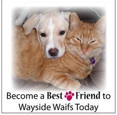 unleashed pet rescue and adoption merriam ks rescue