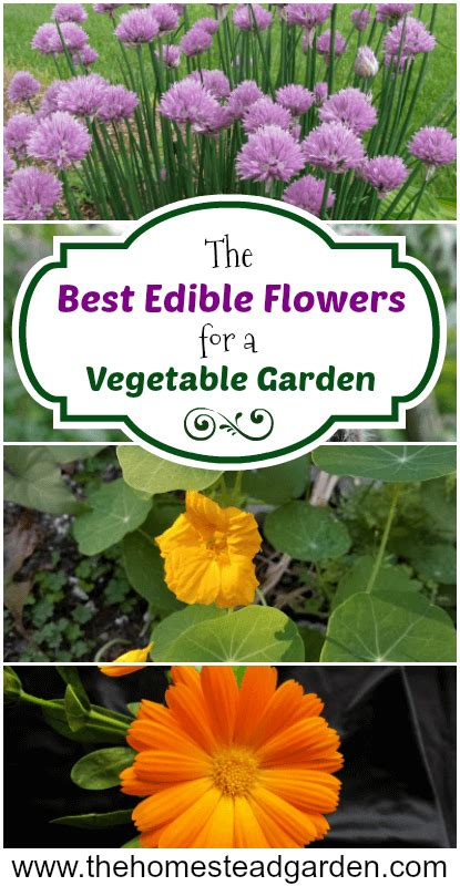 the best edible flowers for a vegetable garden the