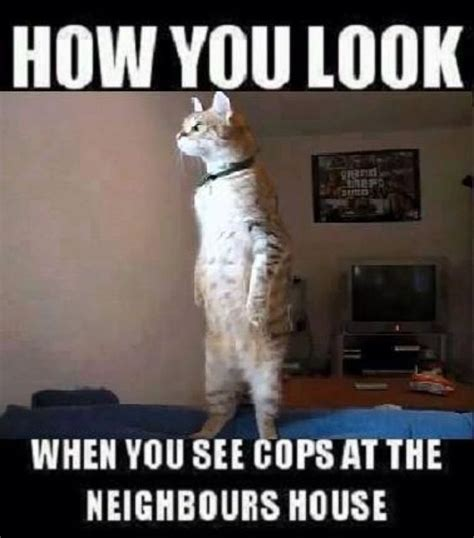 Dirty Sexy Memes - how you look cat meme funny dirty adult jokes memes