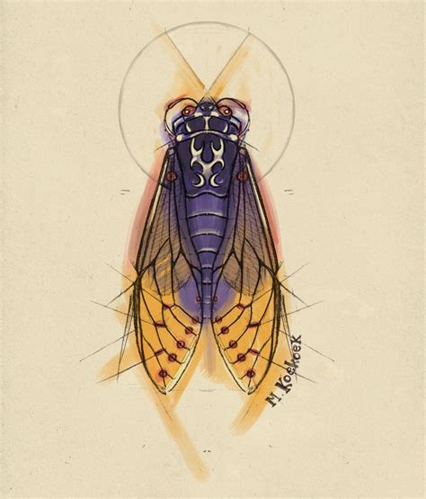 lightning bug sketch cicade bug tattoo watercolor
