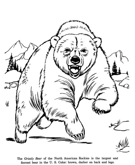 grizzly bear drawing and coloring page wild animals