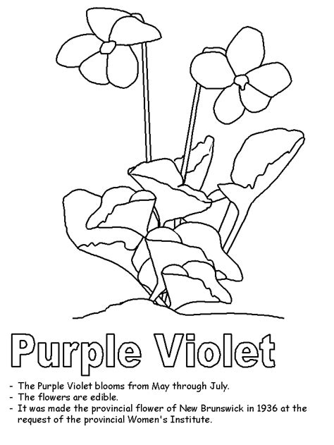 Purple Violet Flower Coloring Page | purple violet coloring page