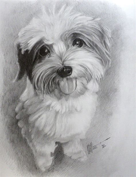 how to a shih tzu how to draw shih tzu