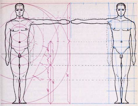 drawing with measurements drawing a human figure in correct measurements and