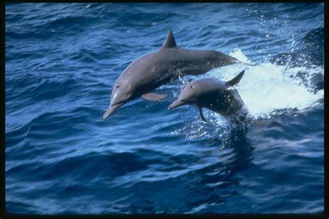 imagenes de amor animadas de delfines delfines cientos de imagenes