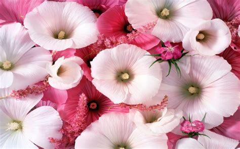 fiori colorati sfondo fiori colorati wallpaperart