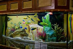 Aquarium Designs A Vibrant Colrful Freshwater Aquarium Decorative