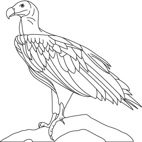 turkey vulture colouring pages