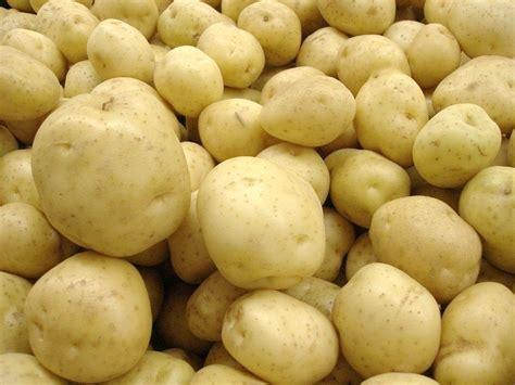 vari 233 t 233 s de pommes de terre notre s 233 lection pratique fr