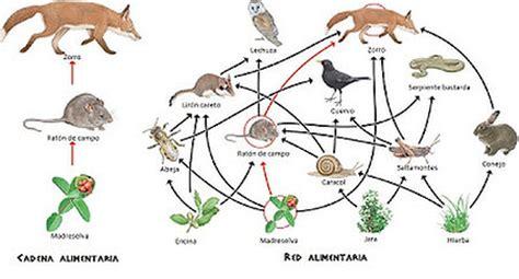 cadenas troficas y ciclos biogeoquimicos 03 las relaciones tr 243 ficas las pir 225 mides tr 243 ficas los