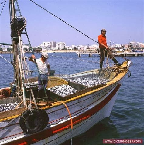 small boats for sale algarve portugal fisherman on boat with sardine catch portimao