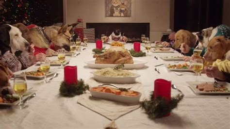 Dogs At Dinner Table by With 13 Dogs And A Cat Wins The Abc7chicago