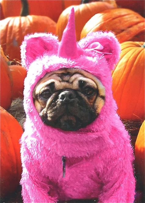pug in unicorn costume pug in pink unicorn costume card greeting card by avanti press ebay