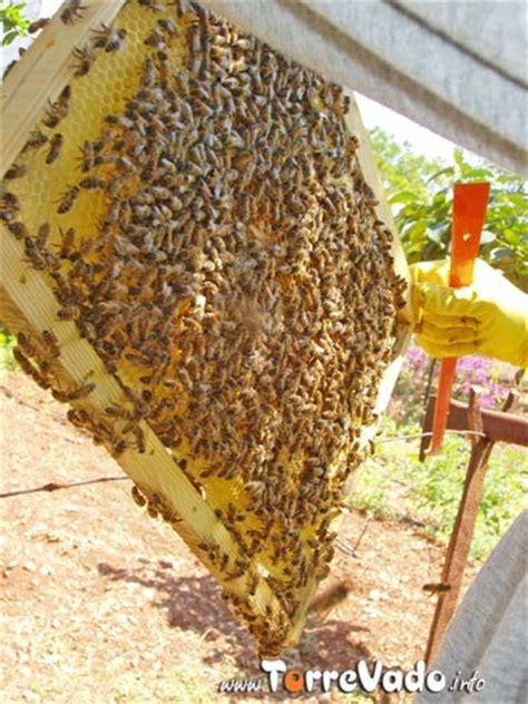 cassetta per apicoltori apicoltura l attrezzatura torrevado info