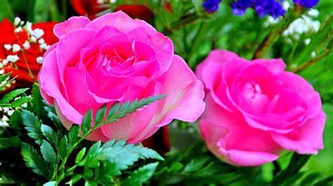 blooms hd wallpapers wallpaper hd for flower pink flowers blooms desktop