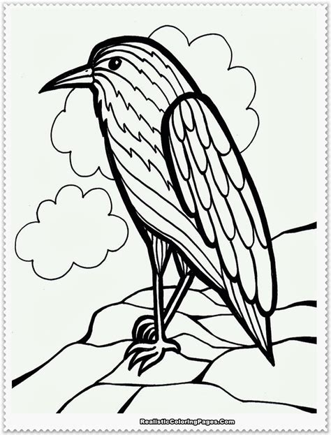 coloring pages birds realistic realistic bird coloring pages coloring pages