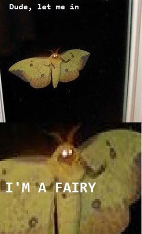 Moth Meme - scary moth memes