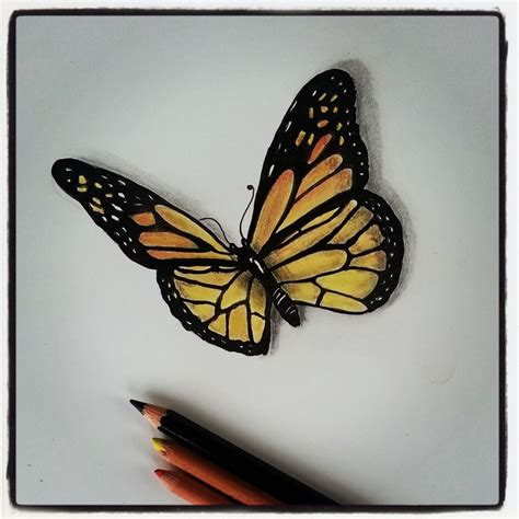 butterfly drawings in pencil archives pencil drawing