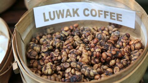Kopi Luwak Coffee kopi luwak or civet coffee bali indonesia stock
