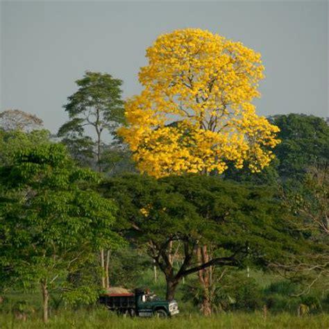 imagenes de paisajes venezolanos imagen paisaje en el llano venezolano grupos emagister com