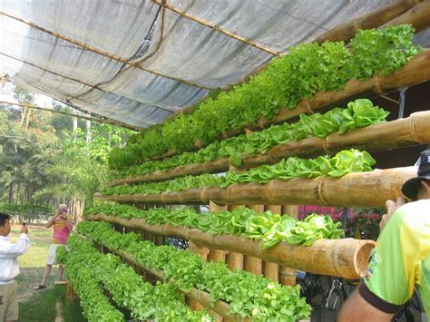 panoramio photo of hydroponics home kit maejo