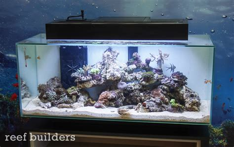 Saltwater C S Hagen the new fluval edge 3 19g all in one tanks nano reef