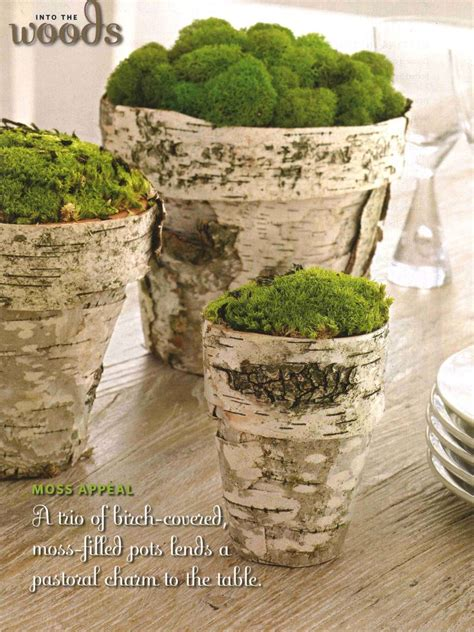 Moss In Planters by Ashbee Design Harvesting Birch Bark For Crafts