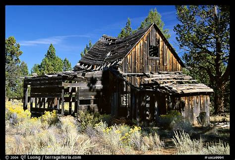 Cabin California by Picture Photo Abandoned Wooden Cabin California Usa