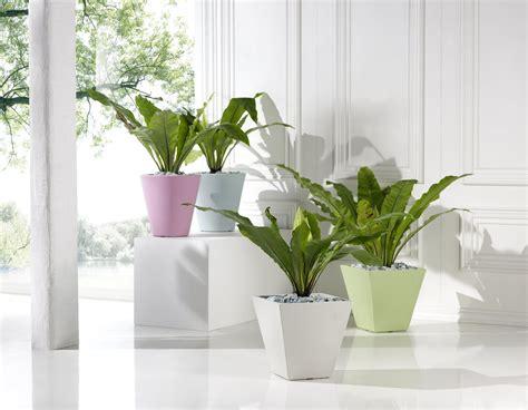 vasi veca vasi veca 28 images veca vasi per fiori e piante