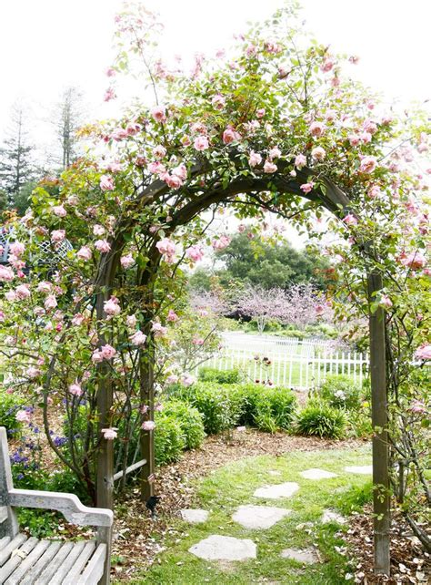 arch for climbing plants 25 best ideas about arbor ideas on garden