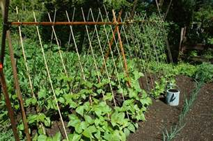 Small Vegetable Garden Space Savers   Harvest to Table