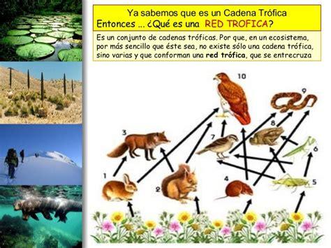 2 interaccion entre seres vivos cadena trofica ciclo - Cadenas Troficas Y Ciclos Biogeoquimicos