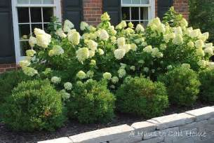 Curb Appeal Plants - a haus to call home limelight hydrangeas garden pool pinterest beautiful sun and backyards