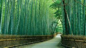 wallpapers gt collection gt murals gt finest mural sagano bamboo forest bamboo forest wall mural majestic wall art