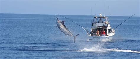 bob jones sportfishing great barrier reef australia - Boat Outfitters Australia