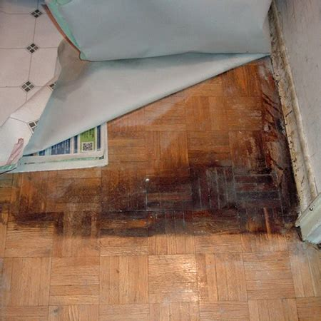 HOME DZINE Home Decor   Do you know what's under your carpet?